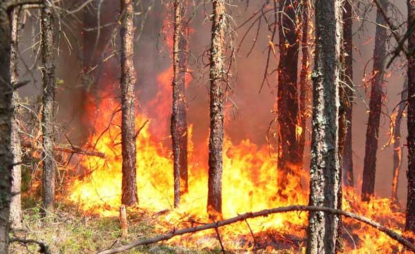 МЧС назвало причину всплеска пожаров на Урале