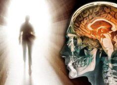 Смерть мозга. Конец жизни?